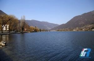 spinone-al-lago (1)