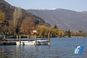 spinone-al-lago (2)