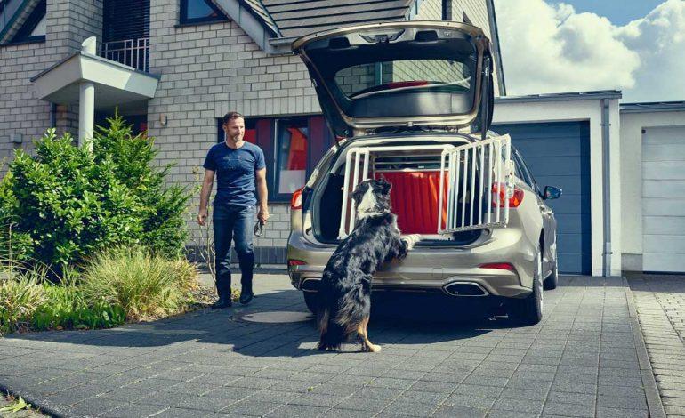 Nuova Ford Focus wagon: un'auto comoda e sicura anche per gli amici a quattro zampe